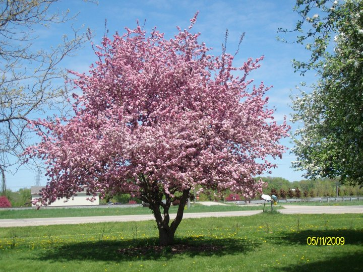 flowering trees and shrubs